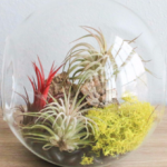 How to make your own terrarium?