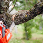 There are two principal approaches for surveying and observing deforestation