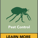Remove the pest with the support of experts