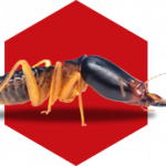 Choose The Best Service For Pest Control